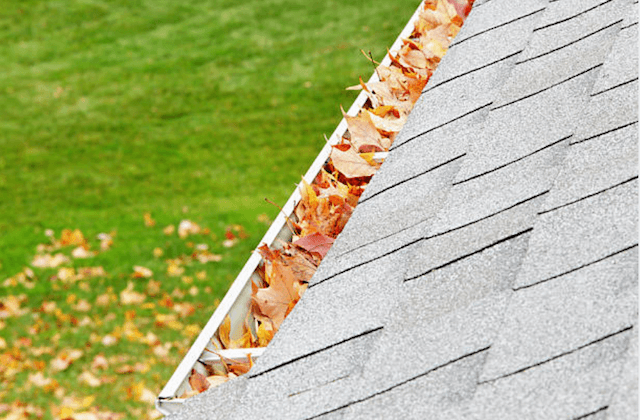 colorful leaves in gutter